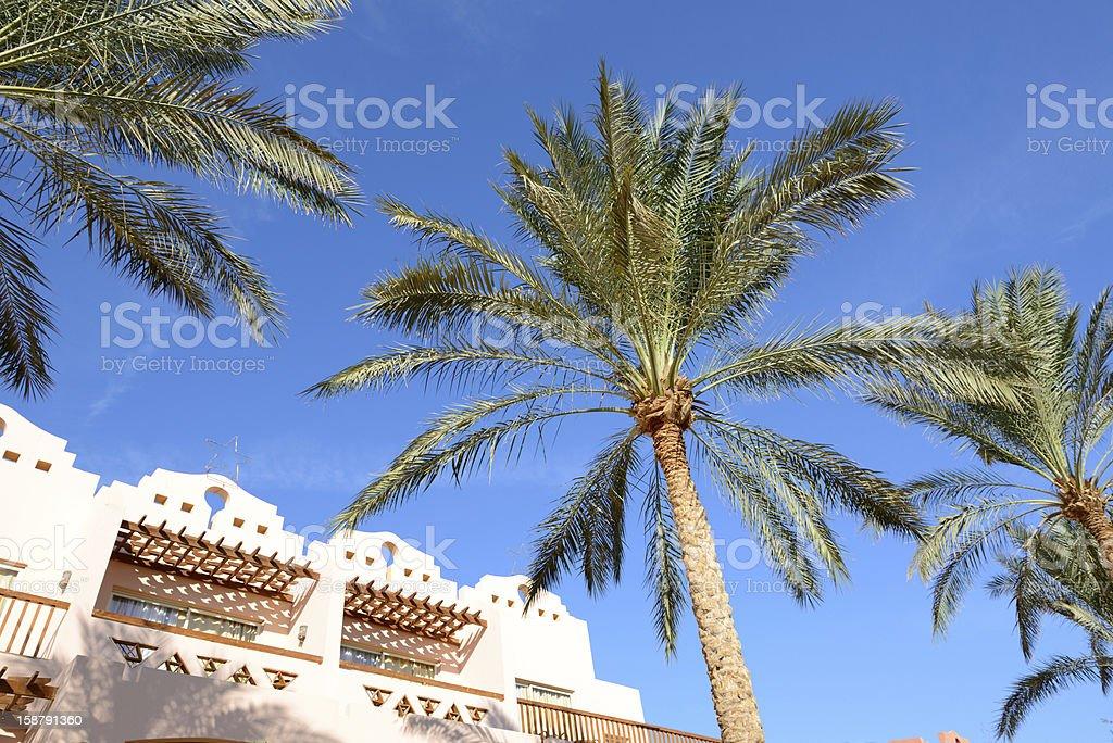 The palm trees at luxury hotel, Sharm el Sheikh, Egypt royalty-free stock photo