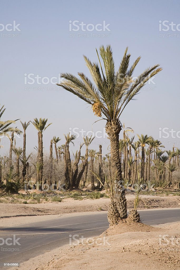 The Palmery  outside Marrakesh, Morocco stock photo