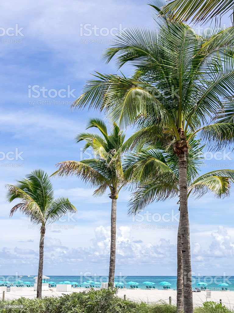 The Palms of the Beach stock photo