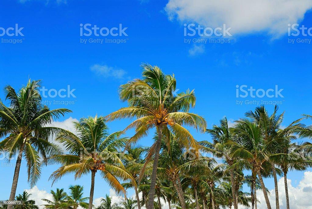 the palms stock photo