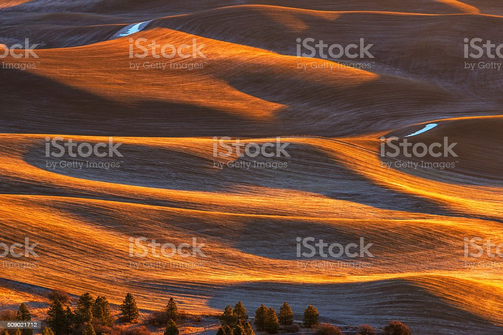 The Palouse at Dawn stock photo