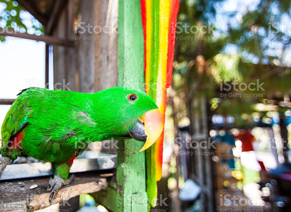 The parrot stock photo