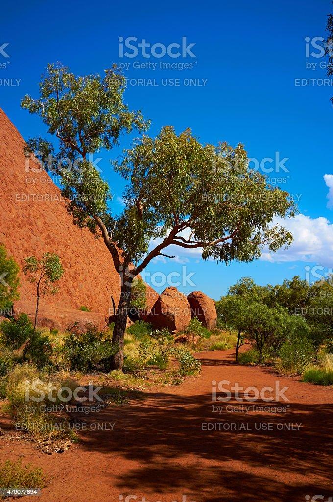 The Path Around Uluru stock photo