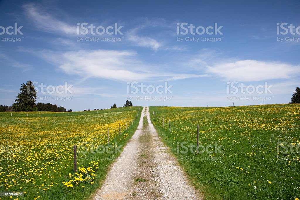 the path in meadow, springtime, bavaria - germany royalty-free stock photo