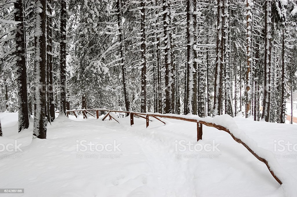 The path in snow-covered park. stock photo