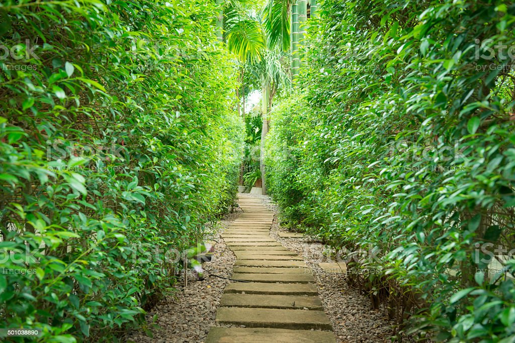 The path in the garden stock photo