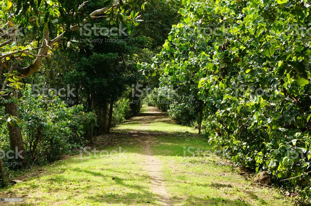 The path in the Park between the bushes stock photo