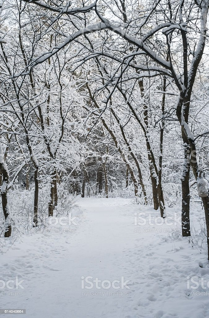 The path in the snow-covered winter forest. stock photo