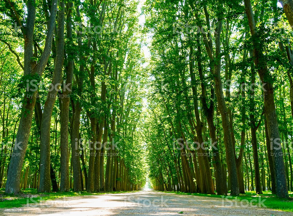 The path of trees stock photo