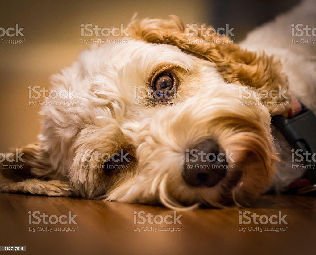 The Peaceful Dog stock photo
