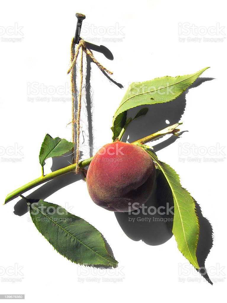 The peach stock photo