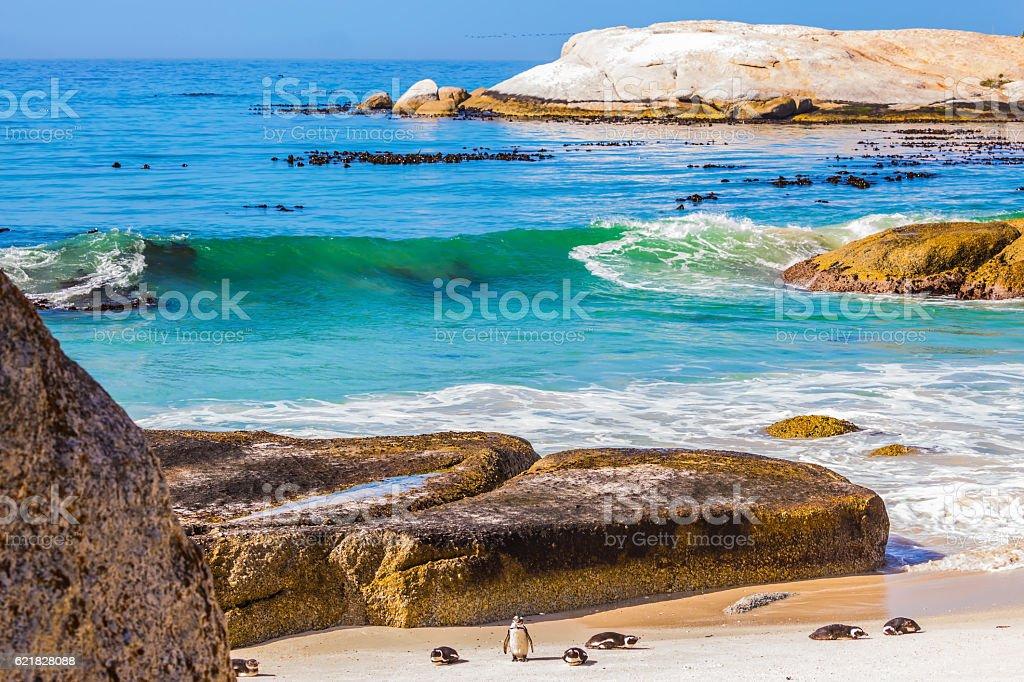 The penguins on the beach of Atlantic Ocean stock photo