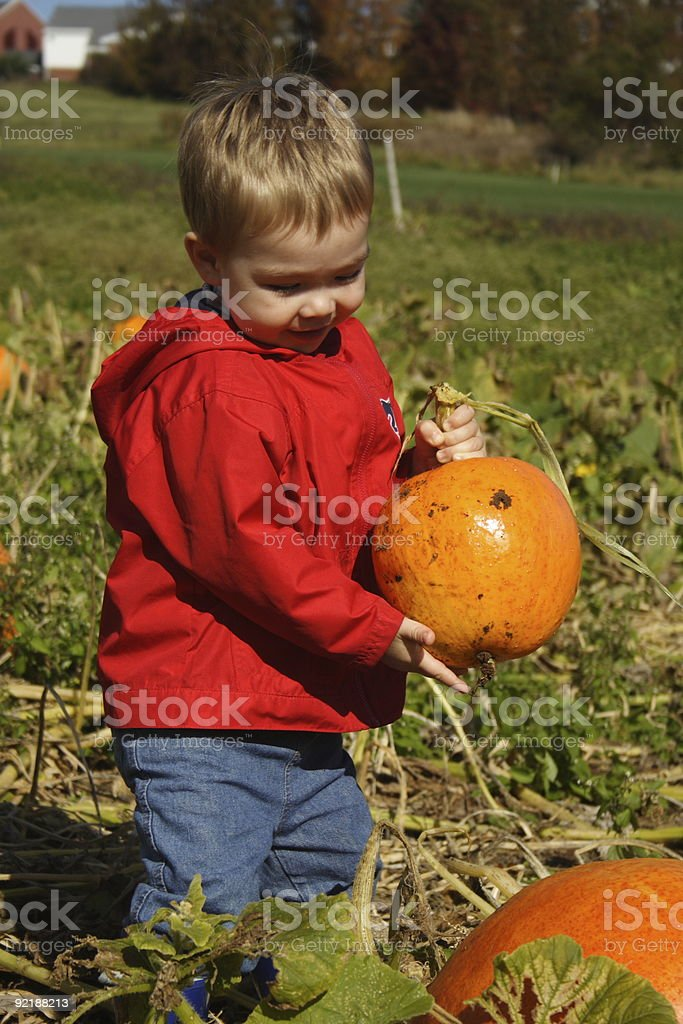 The Perfect Pumpkin royalty-free stock photo