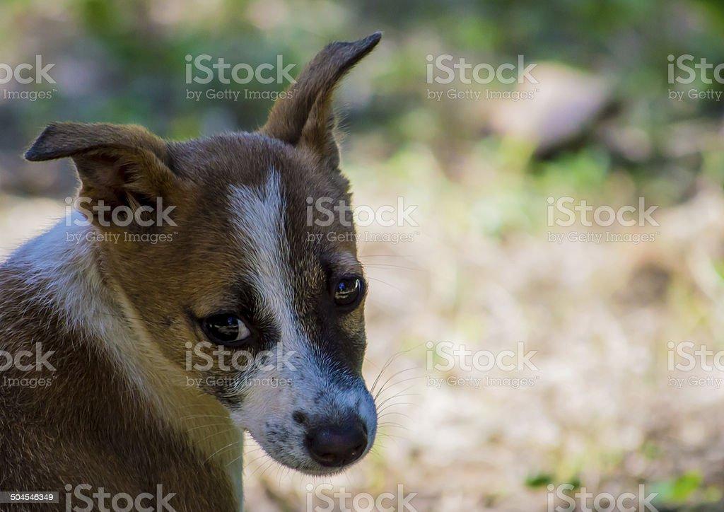 The Pet Dog stock photo