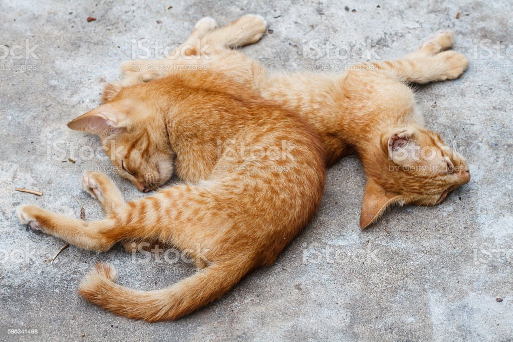 The Pet, Two young orange cat sleeping stock photo