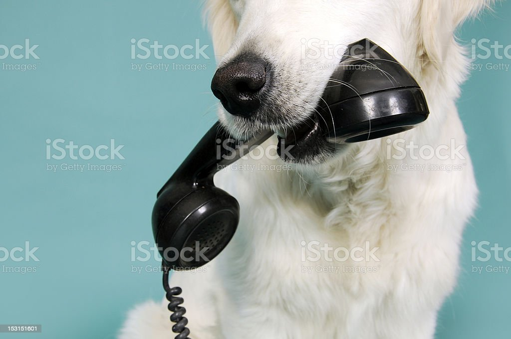 The phone royalty-free stock photo