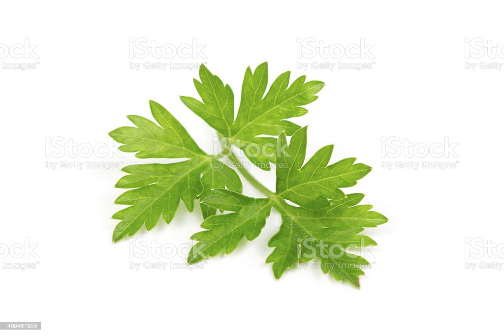 The photo shows parsley leaves on a white background stock photo
