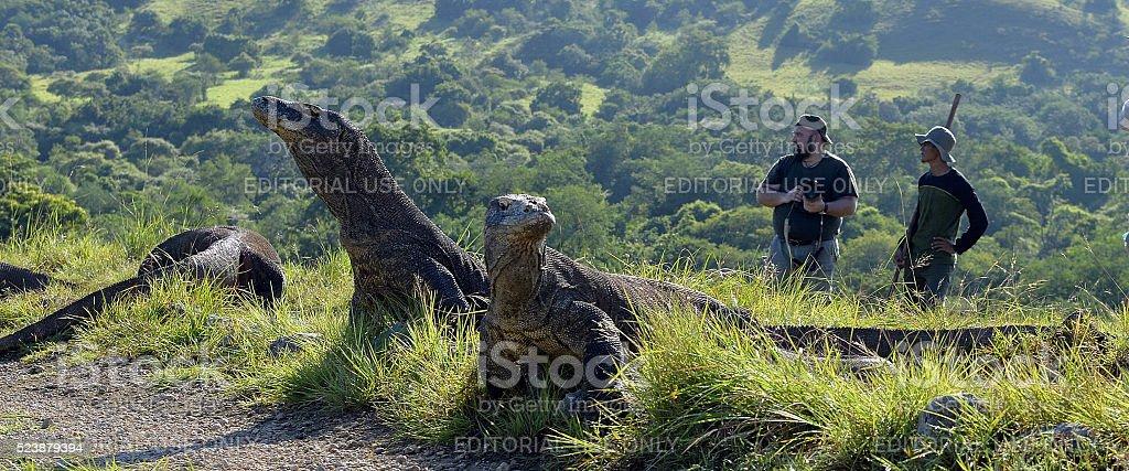 The photographers and Komodo Dragons stock photo
