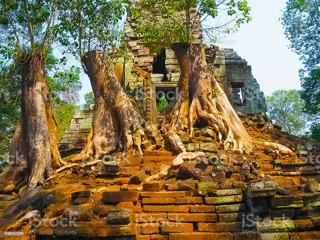 The picture of trees and temple, Angkor, Cambodia stock photo