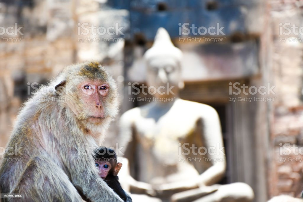 The picture shows two macaques - presumably mum and baby - hugging eachother stock photo