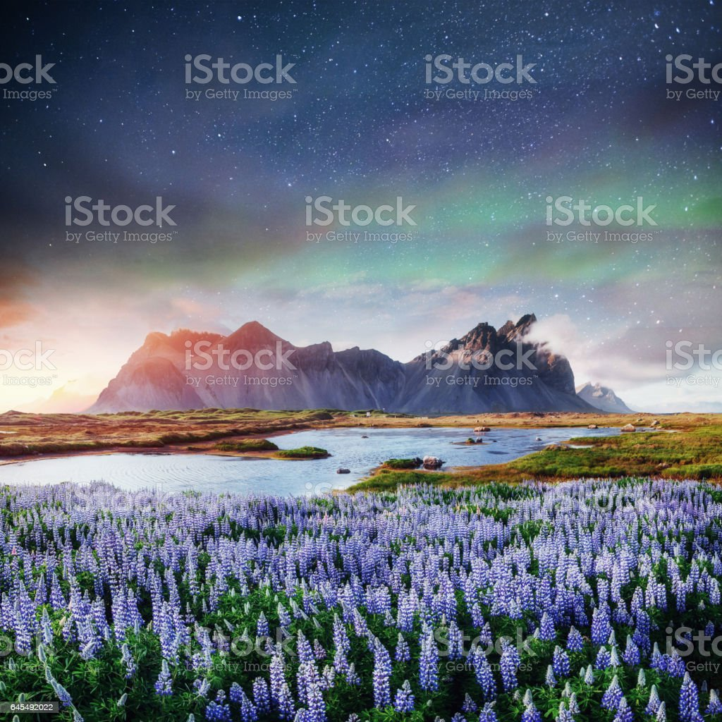 The picturesque landscapes of forests and mountains  Iceland stock photo