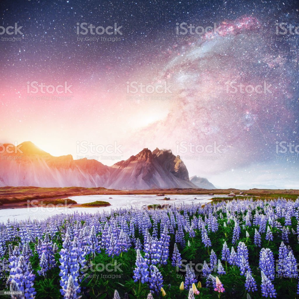The picturesque landscapes of forests and mountains  Iceland. stock photo