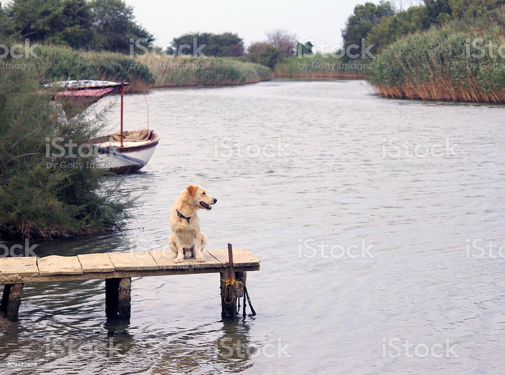 The Pier with Waiting Dog stock photo