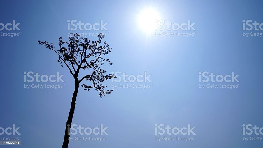 The pine tree by which only one was left stock photo