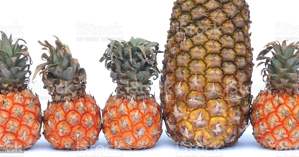 The pineapple that doesn't quite fit in... royalty-free stock photo