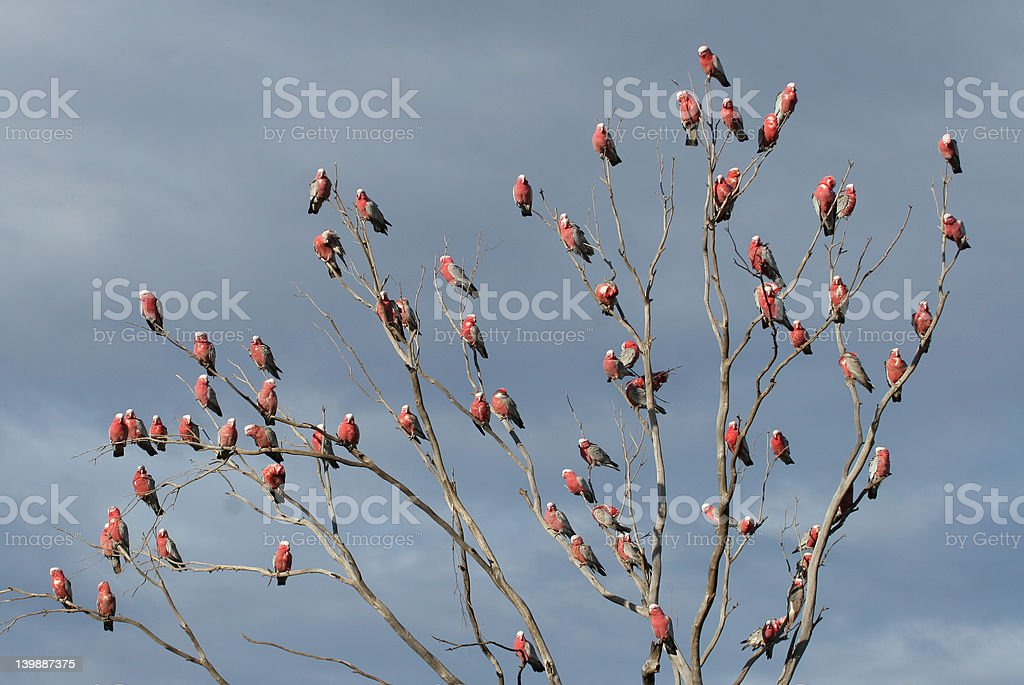 The Pink Parrot Tree royalty-free stock photo