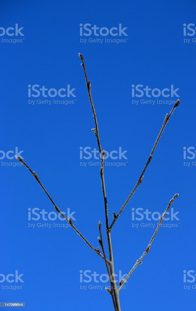 The plant royalty-free stock photo