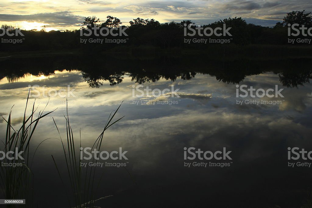 The Pond In The Evening stock photo