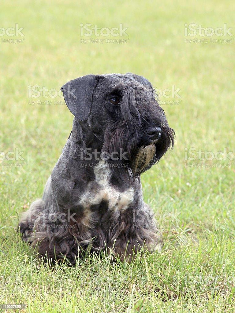 The portrait of dog stock photo