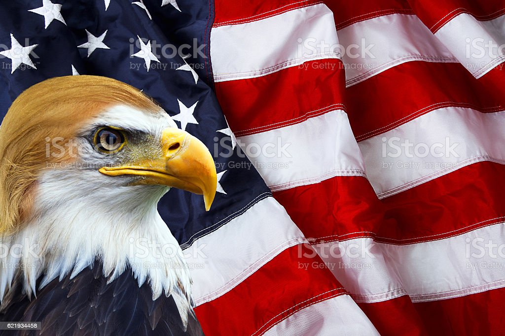 The president - North American Bald Eagle on American flag stock photo