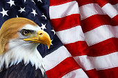 The president - North American Bald Eagle on American flag