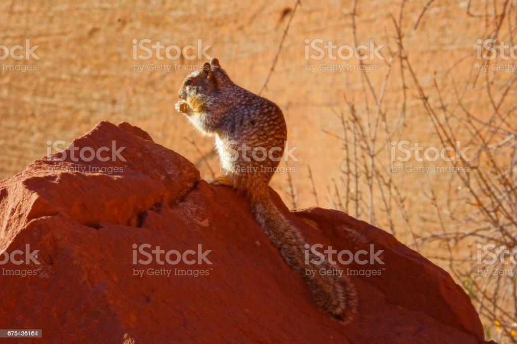 The princess of Canyon de chelly. stock photo