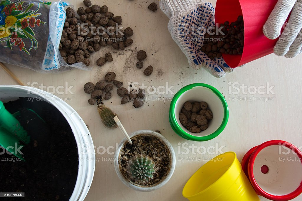 the process of planting a cactus in a pot top view stock photo