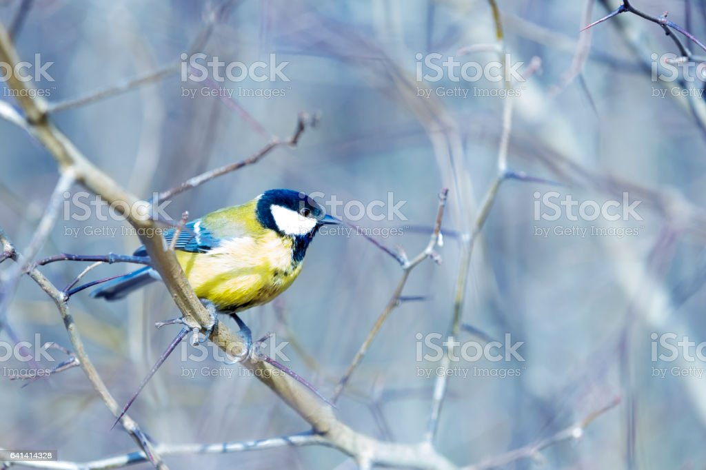 The proud bird stock photo