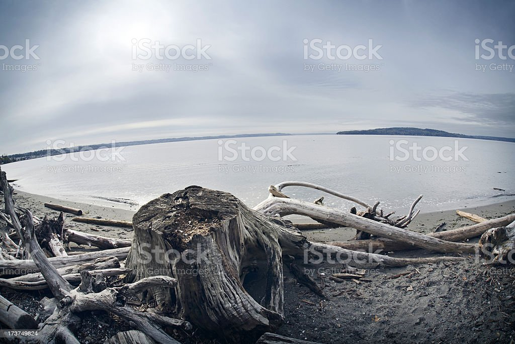 The Puget Sound Beach royalty-free stock photo