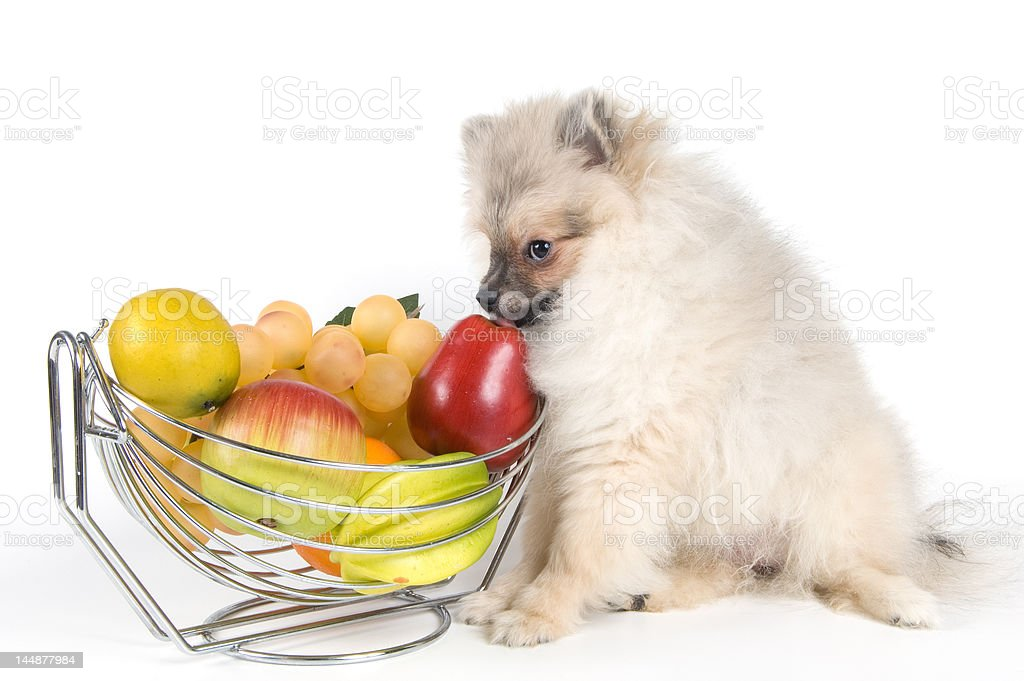 The puppy and fruit royalty-free stock photo