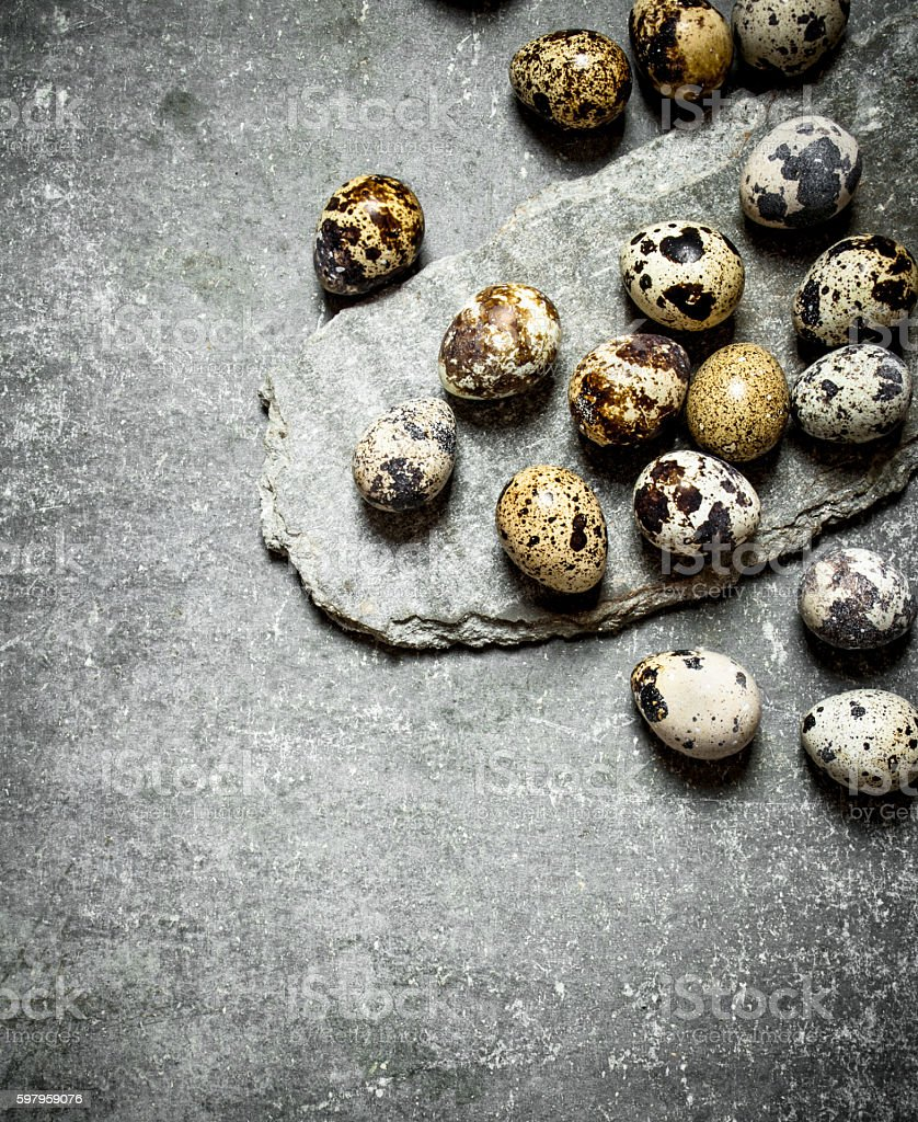 The quail eggs. stock photo