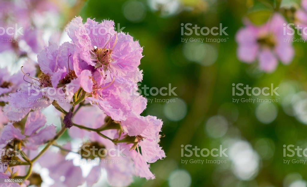 Der Der Königin Blumenstrauß Lizenzfreies stock-foto