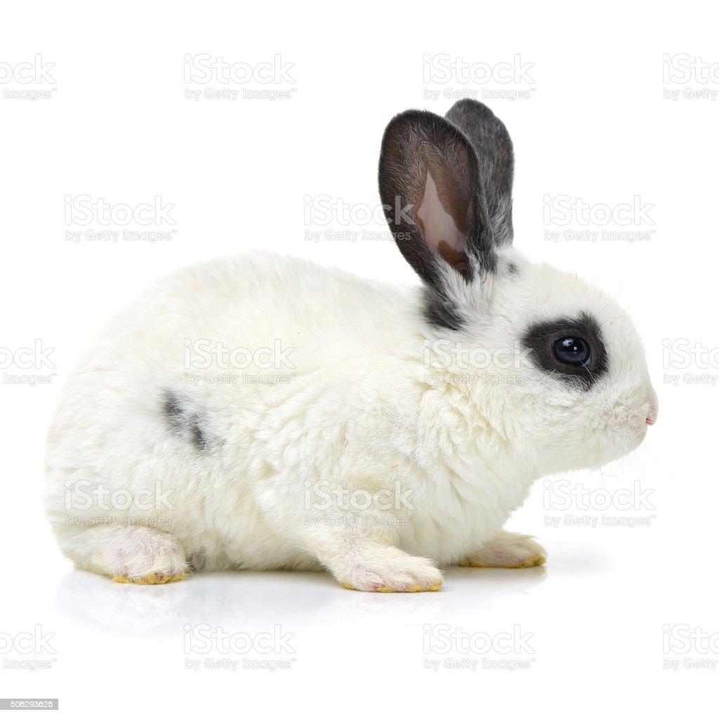 The rabbit stock photo