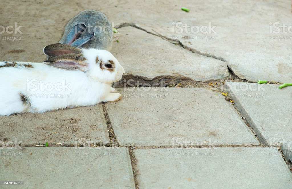 The rabbits Lizenzfreies stock-foto