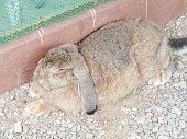The Rabbits.