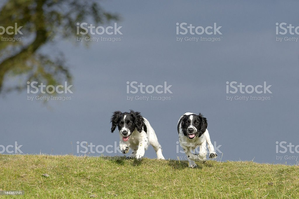 the race is on royalty-free stock photo