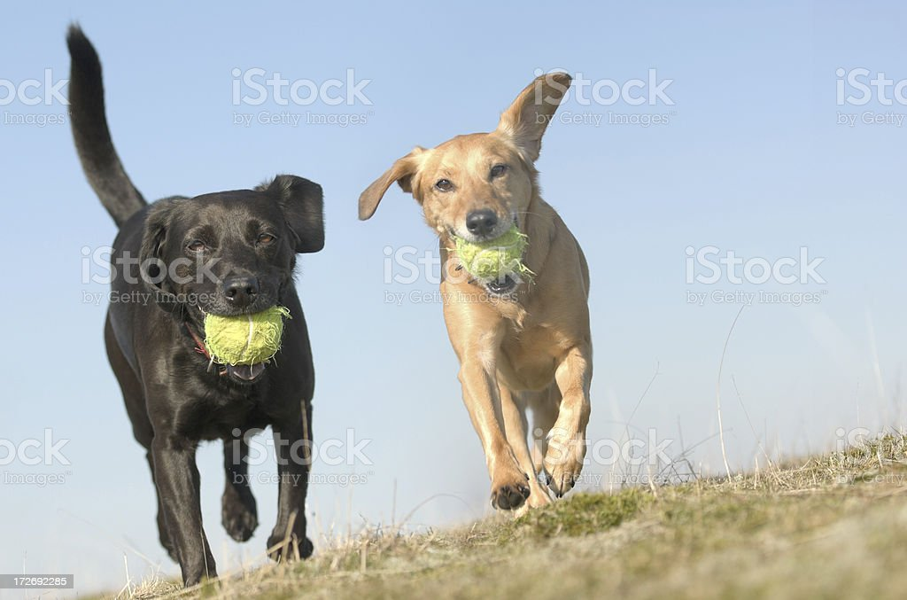 The Race! royalty-free stock photo