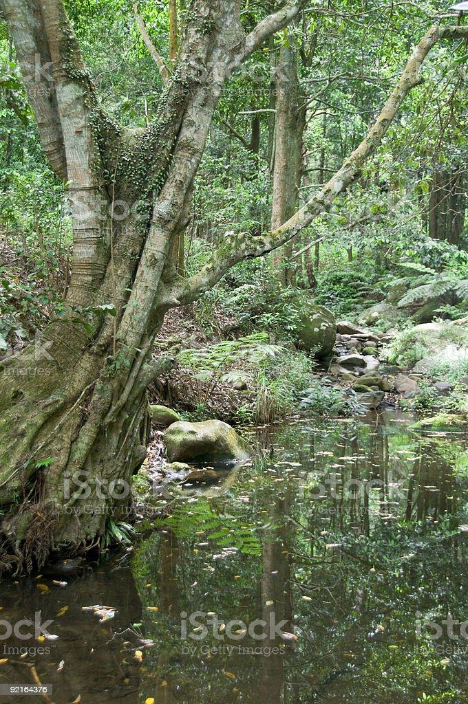 The Rainforest Series stock photo