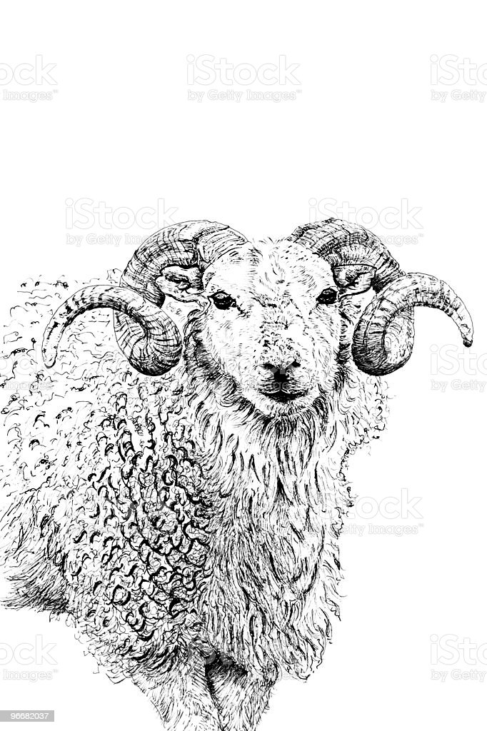 The Ram stock photo