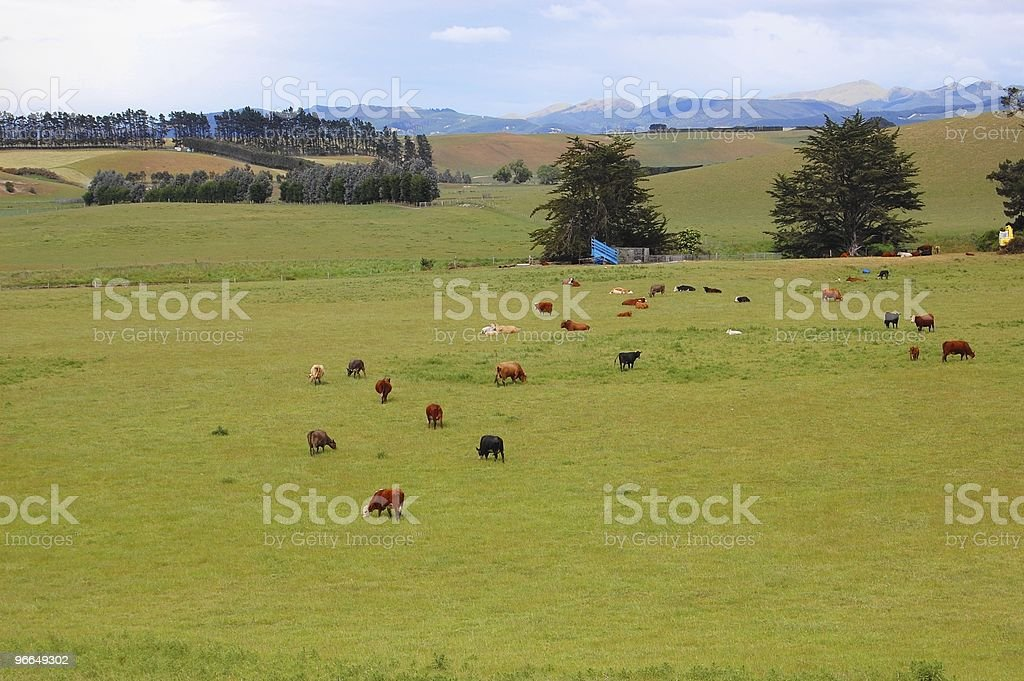 The ranch in New Zealand royalty-free stock photo